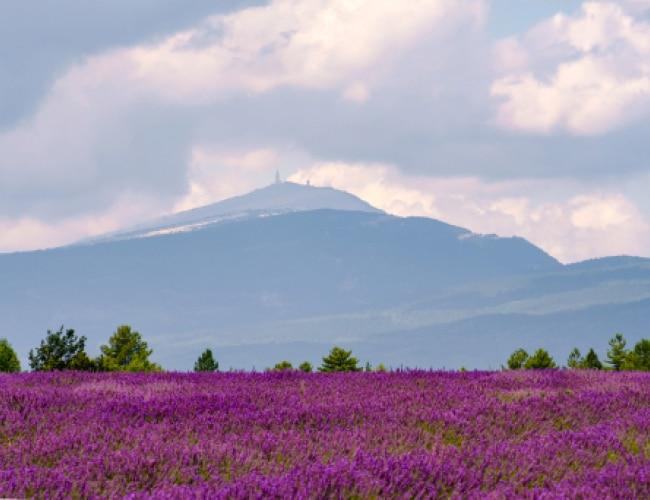 Escapade Vacances Mont Ventoux